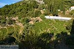 JustGreece.com Vourliotes Samos | Greece | Photo 3 - Foto van JustGreece.com