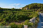 Vourliotes Samos | Greece | Photo 22 - Photo JustGreece.com