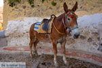 Fira Santorini | Cyclades Greece  | Photo 0057 - Photo JustGreece.com