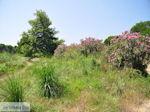 Beschermd gebied Koukounaries - Skiathos - Photo 6 - Photo JustGreece.com