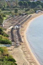 Aghia Paraskevi (Platanias beach) | Skiathos Sporades | Greece  Photo 6 - Photo JustGreece.com