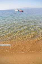 Aghia Paraskevi (Platanias beach) | Skiathos Sporades | Greece  Photo 17 - Photo JustGreece.com