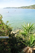 Megali Ammos (Ftelia) | Skiathos Sporades | Greece  Photo 15 - Photo JustGreece.com