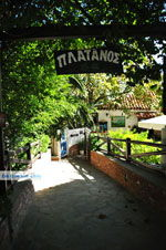 Restaurant Platanos near Profitis Ilias | Skiathos Sporades | Greece  Photo 2 - Photo JustGreece.com