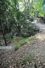 JustGreece.com Wandelpaden near monastery Kechria | Skiathos Sporades | Greece  Photo 2 - Foto van JustGreece.com