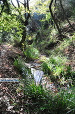 JustGreece.com Wandelpaden near monastery Kechria | Skiathos Sporades | Greece  Photo 18 - Foto van JustGreece.com