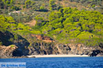 The green eastern coast of Skopelos | Sporades | Greece  Photo 9 - Photo JustGreece.com