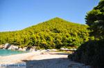 Kastani | Skopelos Sporades | Greece  Photo 13 - Photo JustGreece.com