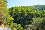 JustGreece.com Palio Klima (Old Klima) | Skopelos Sporades | Greece  Photo 3 - Foto van JustGreece.com