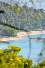 JustGreece.com Near the Beaches Kastani and Milia | Skopelos Sporades | Greece  Photo 1 - Foto van JustGreece.com