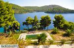 Panormos Skopelos | Sporades | Greece  Photo 17 - Photo JustGreece.com