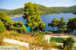 Panormos Skopelos | Sporades | Greece  Photo 18 - Photo JustGreece.com