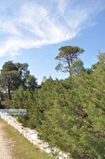 Bossen  near Agios Panteleimon | Skyros Greece Photo 1 - Photo JustGreece.com