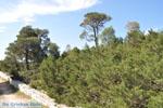 Bossen  near Agios Panteleimon | Skyros Greece Photo 2 - Photo JustGreece.com