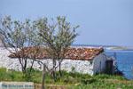 Near Aghios Fokas | Skyros Greece Photo 7 - Photo JustGreece.com