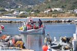 Little harbour near Magazia | Skyros Greece Photo 3 - Photo JustGreece.com