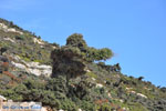 JustGreece.com From Kalamitsa to Vouno | The zuiden of Skyros Photo 4 - Foto van JustGreece.com