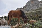 Wilde dwergpaarden in the zuiden of Skyros | Photo 1 - Photo JustGreece.com
