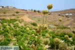 Sa Michalis | Northern Syros | Greece Photo 42 - Photo JustGreece.com