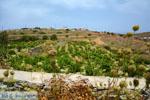 Sa Michalis | Northern Syros | Greece Photo 43 - Photo JustGreece.com