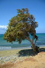 Aghios Fokas ten oosten of Tinos town | Photo 14 - Photo JustGreece.com
