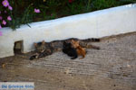 JustGreece.com Xinari near Exomvourgo Tinos | Greece | Photo 8 - Foto van JustGreece.com