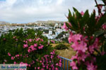 Falatados near Exomvourgo Tinos | Greece | Photo 6 - Photo JustGreece.com