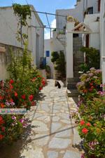 JustGreece.com Falatados near Exomvourgo Tinos | Greece | Photo 21 - Foto van JustGreece.com