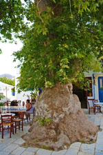 Pyrgos Tinos   Greece   Fotto 27 - Photo JustGreece.com