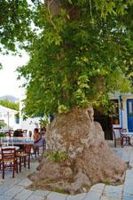 JustGreece.com Pyrgos Tinos | Greece | Fotto 27 - Foto van JustGreece.com
