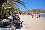 Vai Crete | Lassithi Crete | Greece  Photo 7 - Photo JustGreece.com