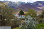 JustGreece.com Village Laimos near Prespes | Florina Macedonia | Photo 2 - Foto van JustGreece.com