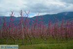 JustGreece.com Velvendo  | Kozani Macedonia | Greece  Photo 1 - Foto van JustGreece.com