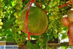 JustGreece.com Zakros and Kato Zakros - Crete - Greece  66 - Foto van JustGreece.com