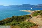 Golden beach Euboea | Marmari Euboea | Greece Photo 12 - Photo JustGreece.com