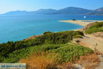 Golden beach Euboea | Marmari Euboea | Greece Photo 13 - Photo JustGreece.com