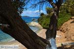 beach Kavos | Marmari Euboea | Greece Photo 9 - Photo JustGreece.com
