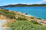 Near Golden beach Euboea | Marmari Euboea | Greece Photo 48 - Photo JustGreece.com