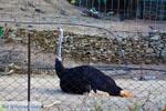 Paradisi Euboea | Greece | Photo 3 - Photo JustGreece.com